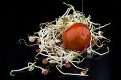 La lenticchia germoglia con il pomodoro ciliegia Fotografia Stock