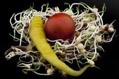 La lenticchia germoglia l'insalata con il pomodoro ciliegia ed il peperoncino Fotografia Stock Libera da Diritti