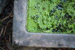 La lenticule 2 Photographie stock libre de droits