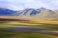 La lentille fleurissant en Castelluccio di Norcia Milliers de couleurs Image libre de droits