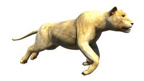La leona que salta mientras que es corriente y actitud del mediados de aire Foto de archivo libre de regalías