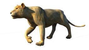La leona que se escabulle para la caza y alista para atacar Fotografía de archivo