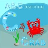 La letra ABC del alfabeto C del animal de mar del fondo de ABC embroma el cangrejo rojo lindo con la rama coralina y las algas ma Imagen de archivo libre de regalías