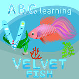 La lettre ABC de l'alphabet V de bande dessinée d'animal de mer de fond d'ABC de fond de mer badine l'animal aquatique W long v d Images libres de droits