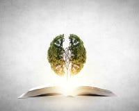 La lettura sviluppa l'immaginazione fotografie stock