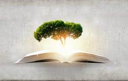 La lettura sviluppa l'immaginazione immagine stock libera da diritti