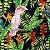 La liana tropicale del pappagallo fiorisce il modello delle foglie Fotografie Stock