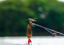 La libélula se encaramó encima de la extremidad de una caña de pescar Fotografía de archivo libre de regalías