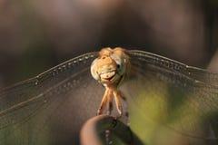La libellule se reposent sur le bâton de fer, macro tir photographie stock