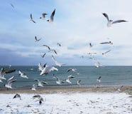 La libertad de vuelo Fotos de archivo libres de regalías