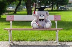 La licence de diplômé d'ours de nounours Photos stock