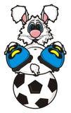 La liebre blanca miente en botas en el balón de fútbol Fotos de archivo