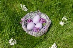 La lila eggs en una jerarquía en fondo de la hierba verde Fotos de archivo libres de regalías