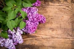 La lila florece con las hojas verdes en la tabla de madera de marrón oscuro Foto de archivo libre de regalías