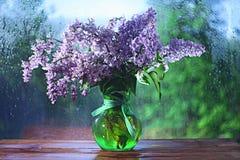 La lila florece el azul macro del fondo Imagen de archivo
