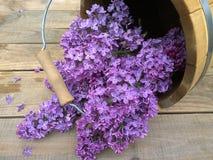 La lila florece en un cubo de madera en un fondo de madera Imagen de archivo libre de regalías