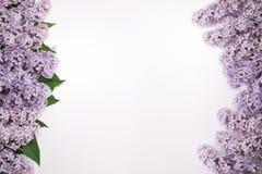 La lila hermosa florece con las hojas a ambos lados de la pantalla Imagen de archivo libre de regalías