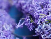La lila púrpura florece profundidad baja vulgaris del syringa del SE del campo fotografía de archivo