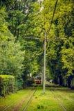 La linea del tram funziona nei boschetti degli alberi Tram rosso alla distanza di prospettiva Immagini Stock Libere da Diritti