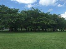 La linea di alberi fotografia stock libera da diritti