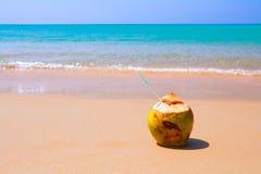 La linea di mare con la noce di cocco che si trova sulla spiaggia Fotografia Stock Libera da Diritti