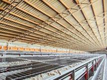 La linea di produzione vuota ed interrotta abbandonata del pollo eggs Fotografia Stock