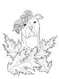 La linea disegno dell'inchiostro di arte di un cane di Staffordshire con Akanthus va Immagine Stock Libera da Diritti