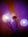 La linterna del ANG de Rose adornó Imagen de archivo libre de regalías