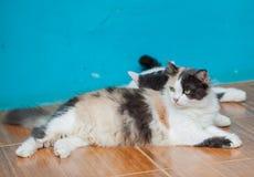 la litière du chat jouent sur la table Images stock