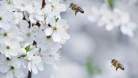 La llamada de la primavera Imágenes de archivo libres de regalías