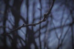 La llegada de la primavera Imágenes de archivo libres de regalías
