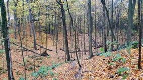 La llegada del otoño Foto de archivo