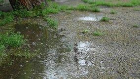 La lluvia cae el goteo en un charco - cámara lenta metrajes