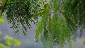 La lluvia cae en la hoja compuesta, cámara lenta almacen de video