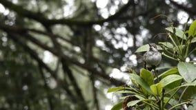 La lluvia cae en pequeño colibrí en invierno almacen de metraje de vídeo