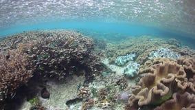 La lluvia cae sobre Coral Reef en Raja Ampat metrajes
