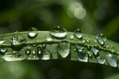 La lluvia chispeante cae en la hierba en día de verano soleado fotos de archivo