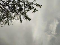 La lluvia del ?rbol sale del rayo y del brillo del cielo imagenes de archivo