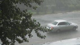 La lluvia pesada del verano vierte la ciudad En el marco de un ?rbol grande verde y de coches Los autom?viles conducen a trav?s d metrajes