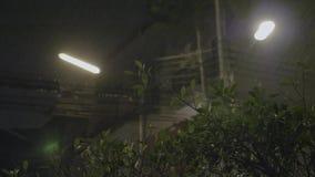 La lluvia tropical vierte en la noche almacen de metraje de vídeo