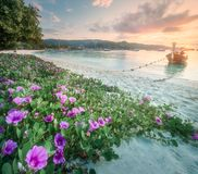 La località di soggiorno, la palma e la costa tropicali della Tailandia tirano Immagini Stock Libere da Diritti