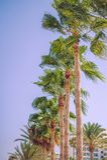 La località di soggiorno tropicale con le palme si avvicina alla spiaggia immagini stock libere da diritti