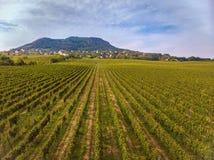 La longueur aérienne de bourdon d'un long raisin rame en Hongrie près du Lac Balaton photos stock