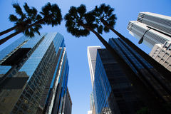 LA Los Angeles downtown with palm trees Stock Images