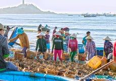 La lotta dei gruppi delle donne porta il pesce alla linea costiera Immagini Stock Libere da Diritti