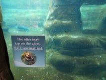 La loutre peut taper sur le verre mais vous ne pouvez pas vous connecter le verre d'aquarium photos libres de droits