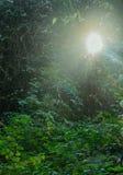 La lucarne dans la jungle Photos stock