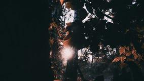 La luce dei raggi di Sun splende attraverso gli alberi ed i rami del chioma forestale della giungla stock footage