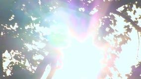 La luce del sole entra nella macchina fotografica che splende fra i rami delle corone dell'albero stock footage