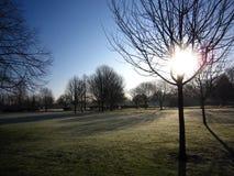 La luce di inverno in un primo mattino Immagine Stock